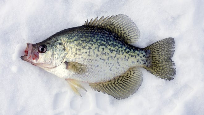 The namesake of the New York State Crappie Derby.