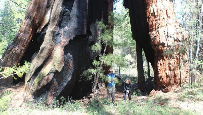 Frederick Valyocsik and his brother Alastair live in California Hot Springs in the Giant Sequoia National Monument.