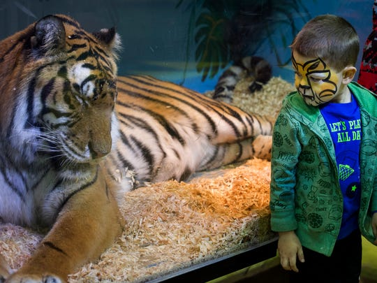 Jaxson Hedges, 4, looks behind him before getting his picture taken with a tiger at the 84th Hadi Shrine Circus at The Ford Center in Evansville, Ind., on Friday, Nov. 24, 2017. Tigers are Hedges' favorite animal.