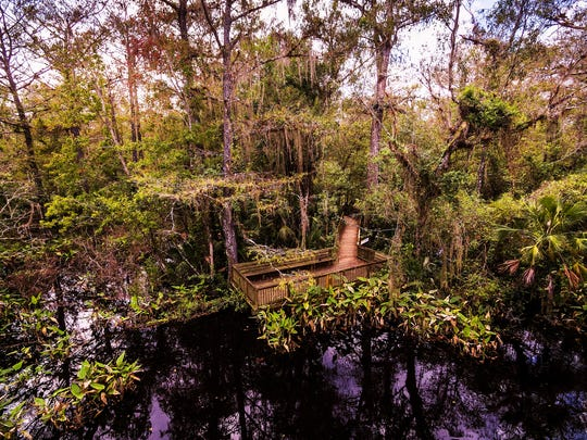 A photo by a drone shows the end of the boardwalk at the Fakahatchee Strand State Preserve in Copeland.