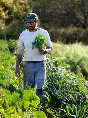 Caleb Trainor, farm manager at Wellspring Farm in Newburg, checks on harvested kale and other vegetables during harvest. The farm provides certified organic produce to about 130 families plus restaurants and farmers markets.