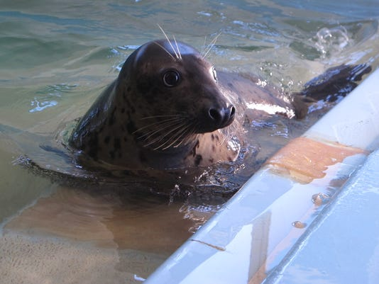 Bounce Back Seal