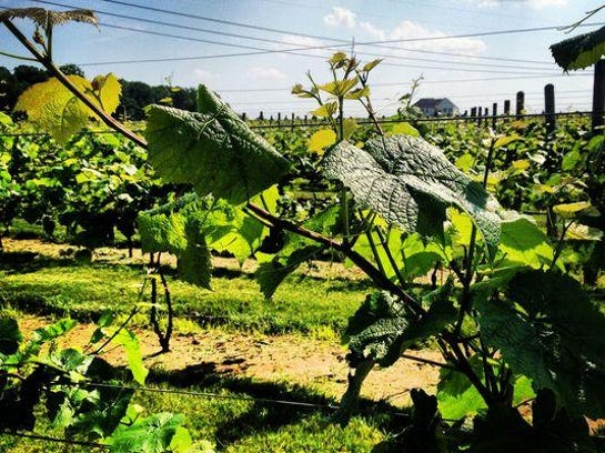Wineries are very popular in Hunterdon County.
