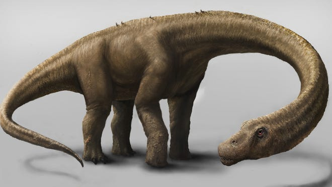 This undated artist rendering provided by the Carnegie Museum of Natural History shows the Dreadnoughtus.