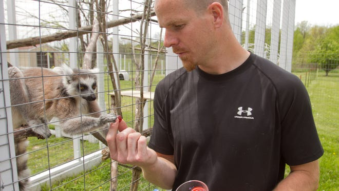 """Brent Barrick feeds grapes to Nyah, a 2 1/2-year-old lemur at his """"traveling zoo"""" based at his Tyrone Township home."""