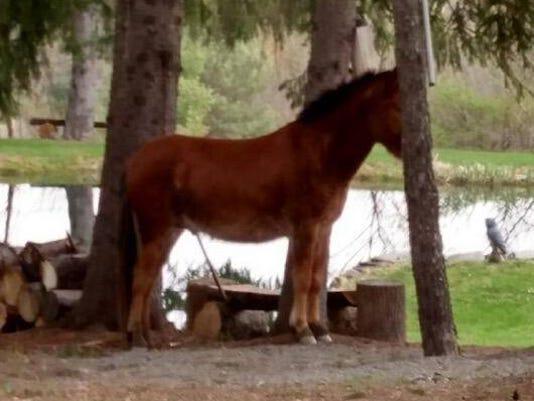 635971969864063396-horse.jpg