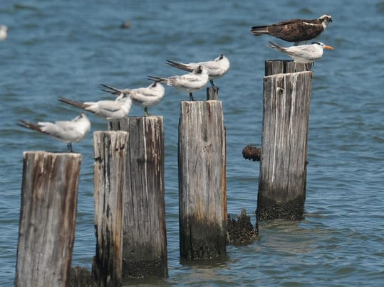 birds on posts.jpg