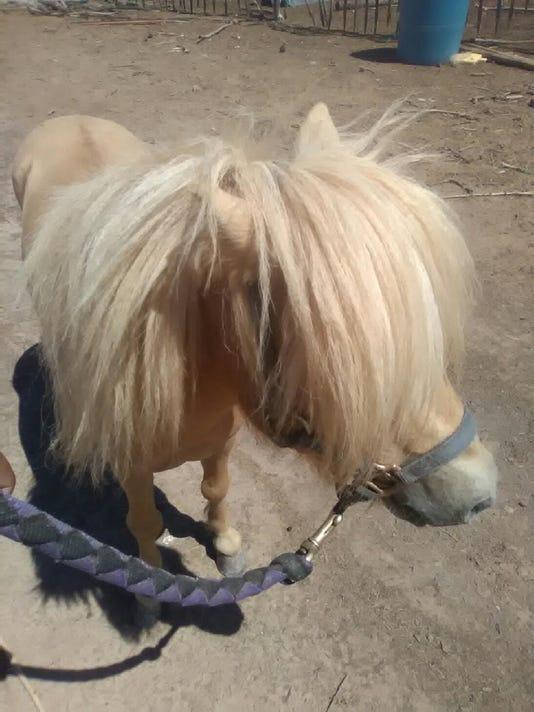 Stolen pony photo 2