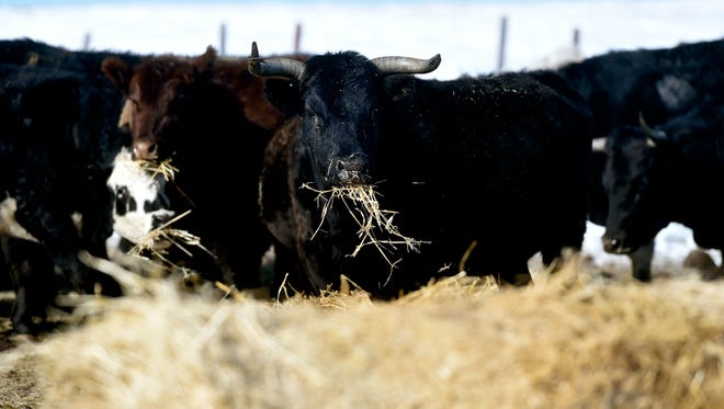 A group in Winnett, east of Lewistown, made it a goal to put locally grown beef in the public schools. Mission accomplished.
