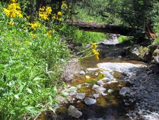 Wildflowers populate the baks of a mountain stream