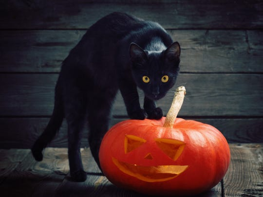 The American Society for the Prevention of Cruelty to Animals says black cats are not at any greater risk around Halloween, but some shelters still put them away around the holiday for their protection.