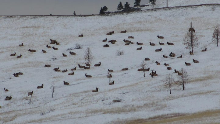 The elk shoulder season, which has turned out to be