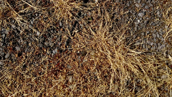 Grass dried out from the heat can been near Tiger Stadium on Friday, June 24, 2016, in Detroit.