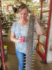 Tonya Wiley of Havenworth Coastal Conservation in Palmetto examines a sawfish rostrum in a St. Augustine gift shop last year.