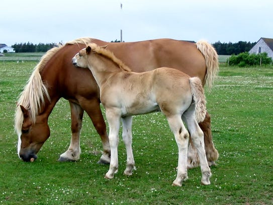 A loving pair commune on Prince Edward Island, Canada,