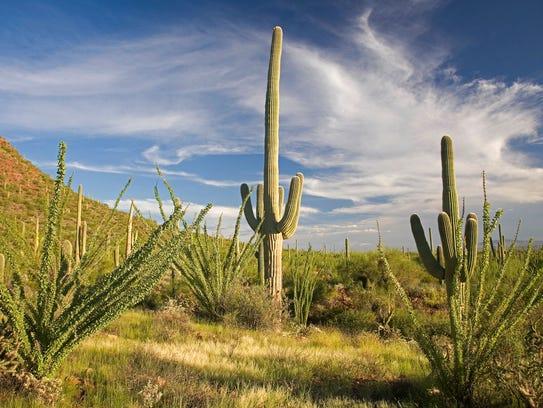 Saguaro National Park - Courtesy of Visit Tucson