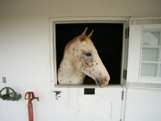 Horse Care Workshops will be held at Lord Stirling