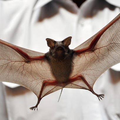 Bat in the house? You're not alone this time of year