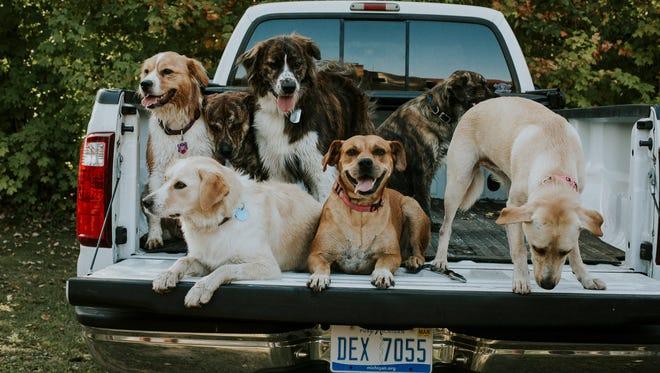 Los siete cachorros que fueron noticia el año pasado cuando fueron rescatados por un grupo de despedidas de soltero tienen su propio calendario.