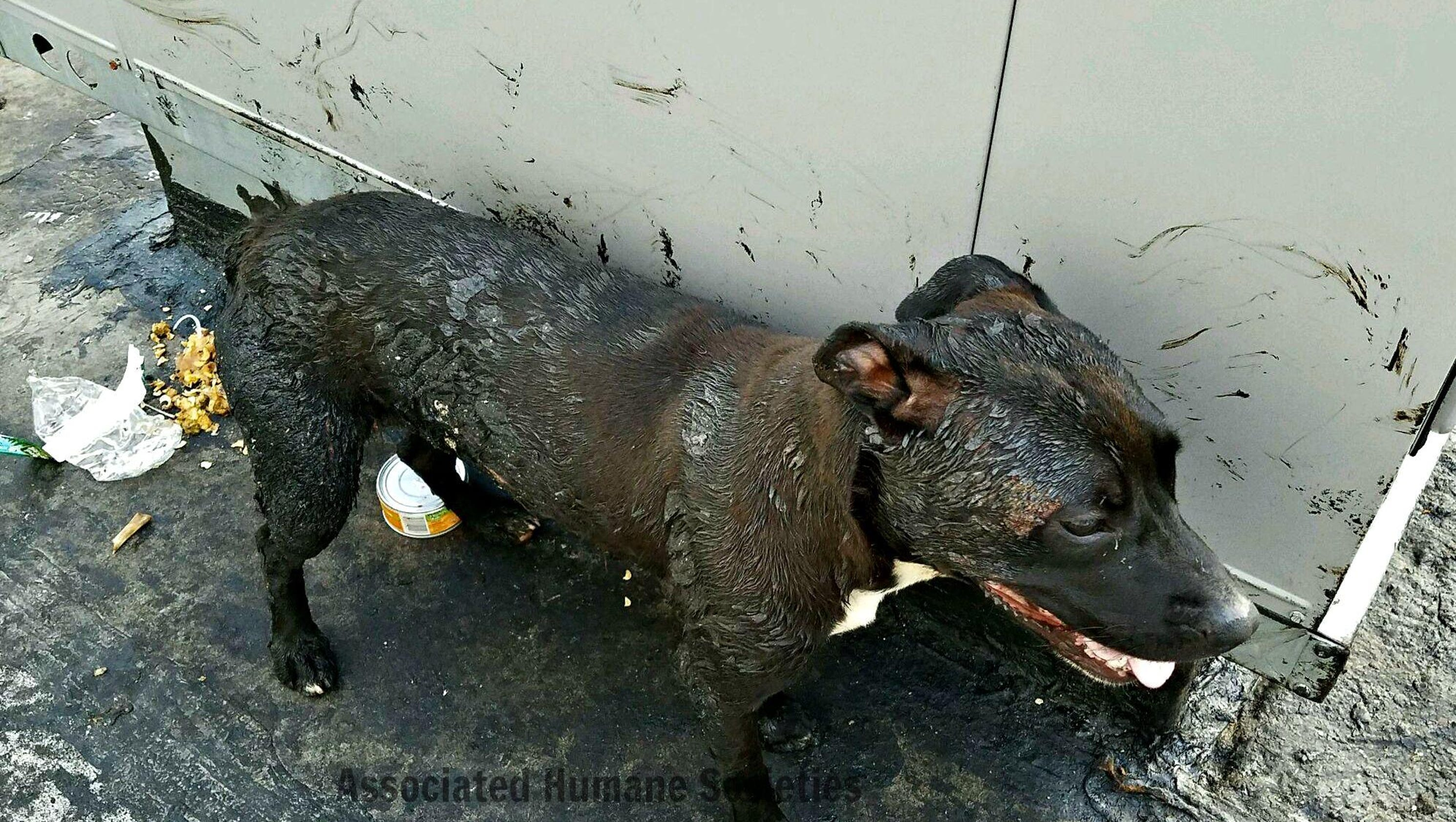 Two Dogs Rescued From Roof Covered In Boiling Tar