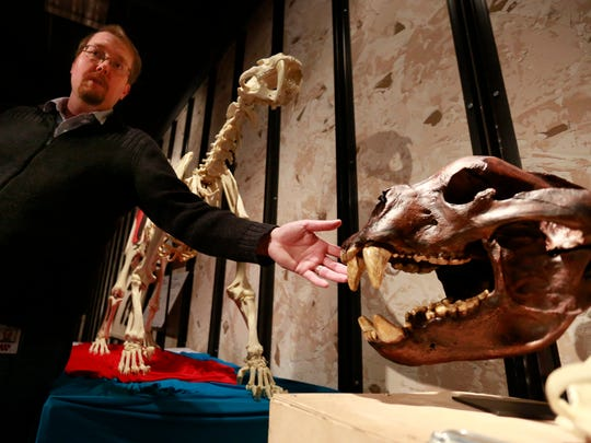 Thomas Bradford, a volunteer, talks about a replica giant short-faced bear skull Tuesday, April 4, 2017,  during a tour of Colossal Fossils in the Wausau Center mall. Behind Bradford stands a replica of a saber-tooth cat skeleton.