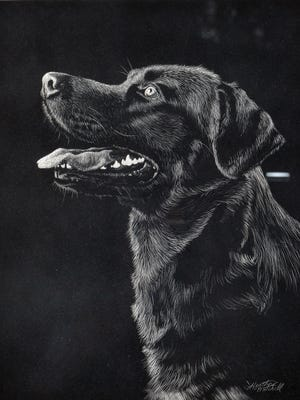 """Delighted"" by Heather Mitchell showcases her patient utility with scratchboard. It's on display at The Wright Place."