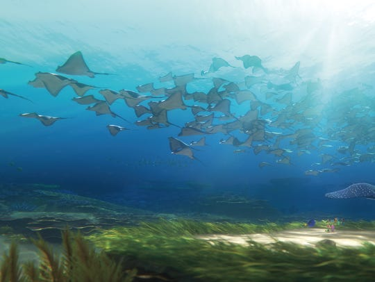 Ray migration set against the surface of the water