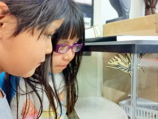 Randy Chimal and Kylena Chino watch the surprise addition to their class, a  Two-tailed Swallow Tail Butterfly.