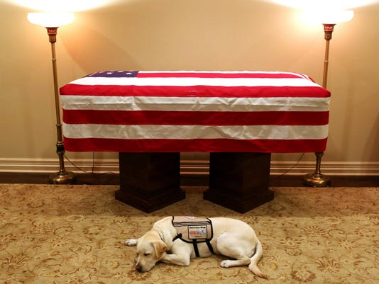 George HW Bush Service Dog