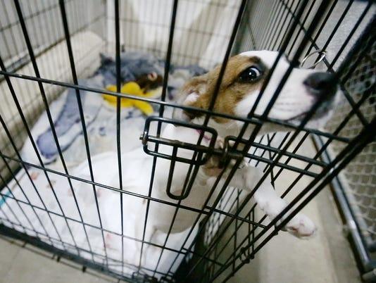 ELM-0226-Animal-Shelter.jpeg