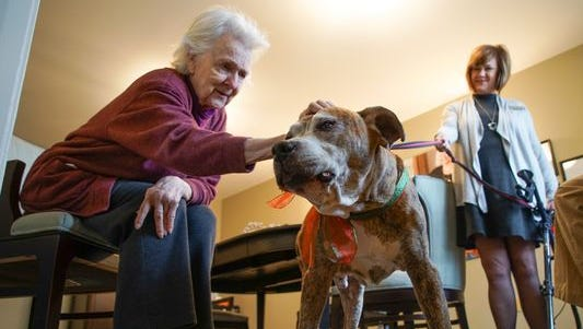 Georgie Cole, a resident at Rockland Place, pets Rusty, an 8-year-old boxer that now lives with residents full time after being adopted from Faithful Friends.