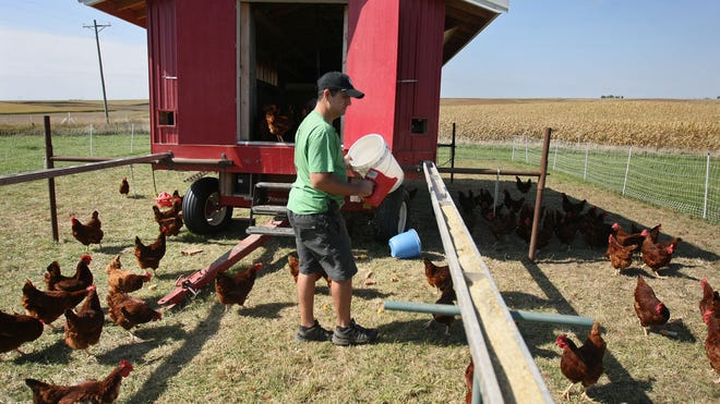 Iowa farms are dwindling in number and growing in size, a new farm census shows. Nick Wallace feeds chickens on his century farm near Keystone.