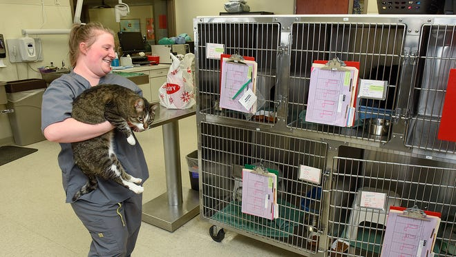 Veterinary technician student Bree Hinkle puts a cat back in a kennel Tuesday, Dec. 13, at the Minnesota School of Business. The for-profit college will lose its federal student aid funding at the end of the year. Hinkle has six months left in the program to graduate.