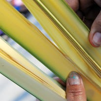 For sale on Palm Sunday, simple offerings made with fresh palm fronds by the Benitez family.