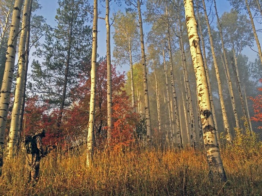 Chris White, lower left, sneaks through an aspen grove while bowhunting elk in southeastern Idaho.