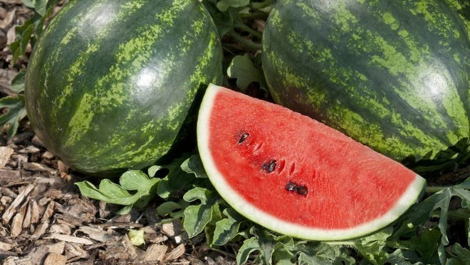 Watermelon is fast becoming a diverse fruit.