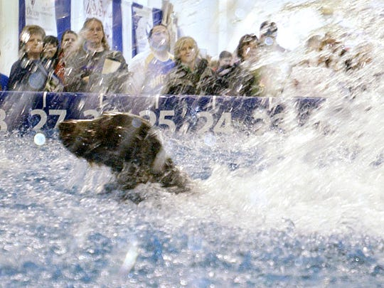 A Chesapeake Bay retriever jumps nearly 25 feet while competing in the regional Dock Dogs competition during the Pet Expo at the Sunnyview Expo Center in this file photo.