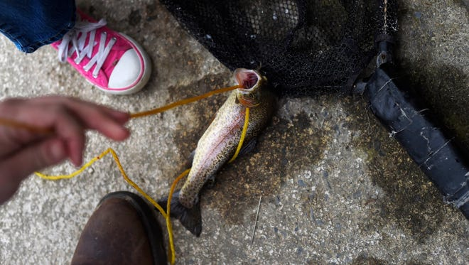 The third trout caught by Marlee Mixell wriggles on the pavement next to Yellow Breeches Creek.