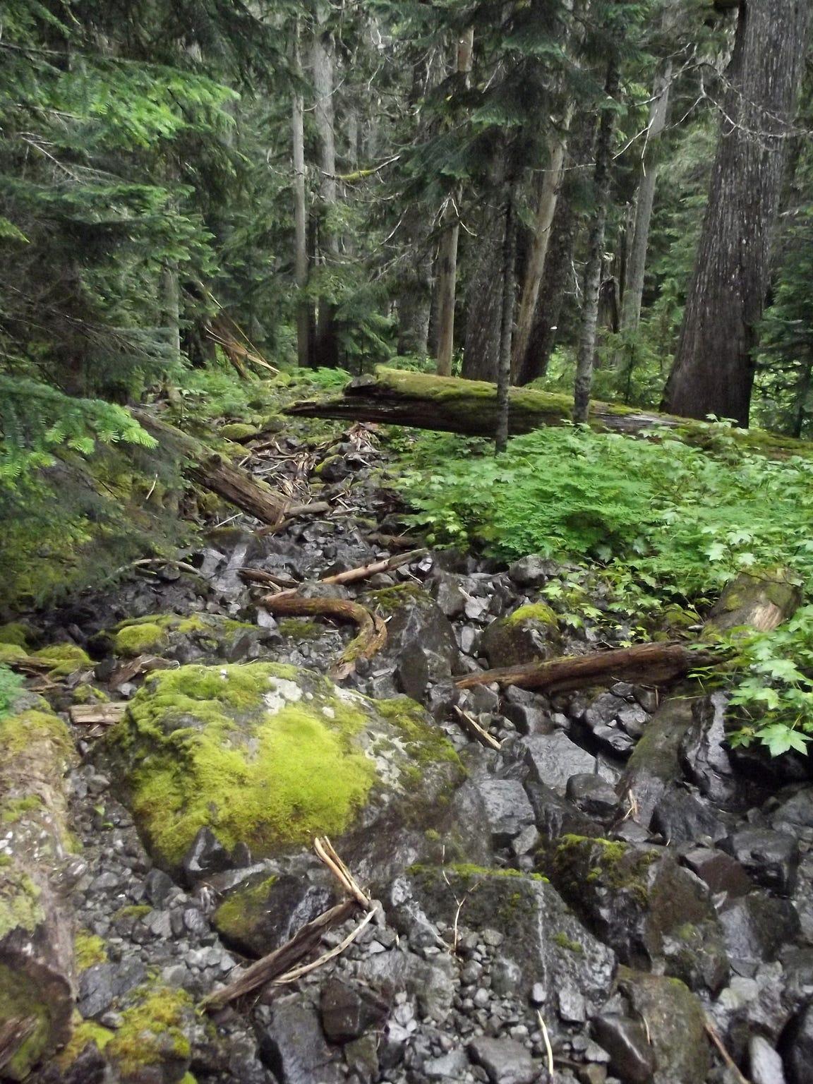 The terrain at Mt. rainier National Park is steep and