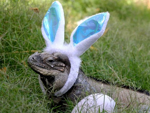 Watch out Easter bunnies, these animals around the
