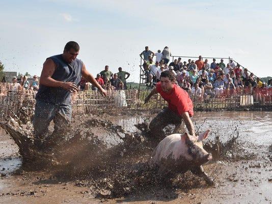 -DCA 0817 pig wrestling 3.jpg_20160815.jpg
