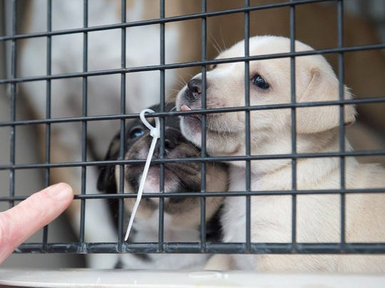 Puppies from Maricopa County await their arrival off