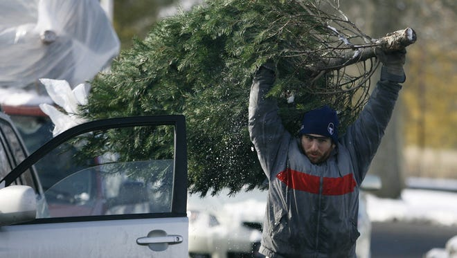 Ted Rossini, a volunteer from Keep Indianapolis Beautiful, removes a  Christmas tree from a roof of a vehicle Saturday, January 9, 2010 at Broad Ripple Park.  The Office of Sustainability, in conjunction with Indy Parks, the Department of Public Works and Keep Indianapolis Beautiful, hosted the fourth annual Post-Holiday Recycling Event.  This one-day event  offers residents a safe way to dispose of unwanted electronics and to provide a reuse and recycling option for Christmas trees. Danese Kenon/The Star