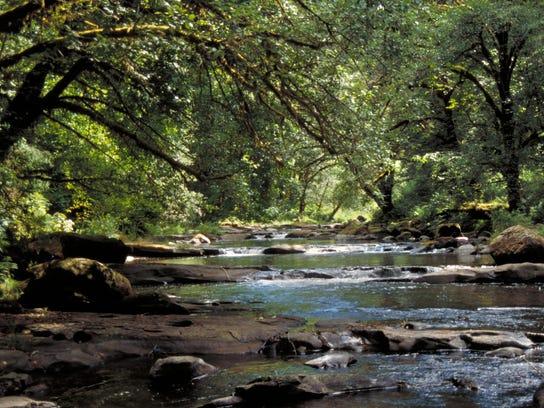 Drift Creek at Harris Ranch