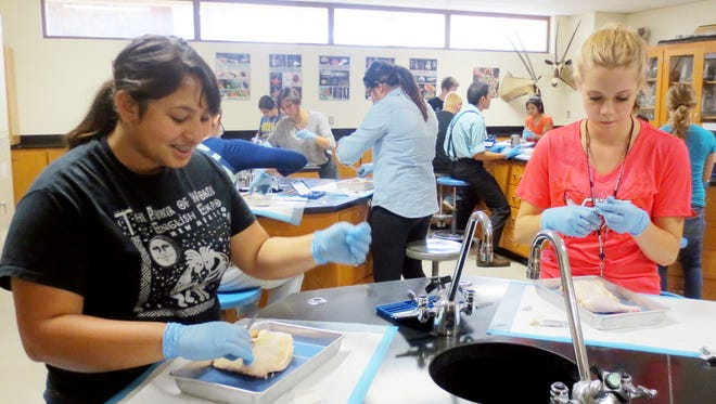 Health Career Academy participants in 2015 received hands on experience in the WNMU Science Lab during the free summer program. Students interested in health care careers can register now with FORWARD NM to participate in the summer academies.