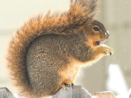635603771124033341-21775856-source-squirrel