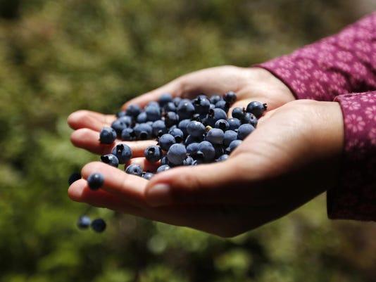 Fewer Blueberries (2)