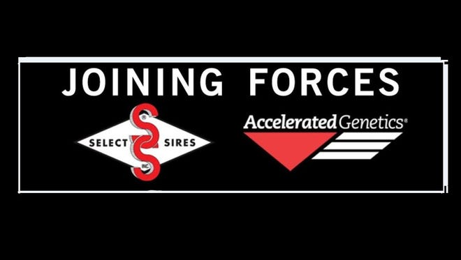 Select Sires Inc., and Accelerated Genetics will join forces this summer.