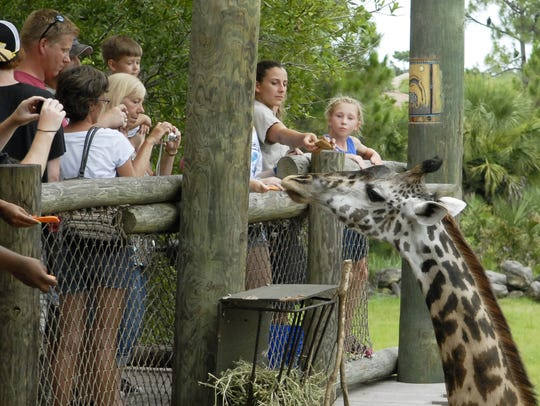Visiting the giraffes and other animals at the Brevard