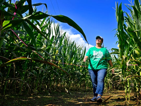 Amy Ladd, owner of Lucky Ladd Farm walks through  corn stalks she designed as an entirely Predators-themed 4-acre corn maze at Lucky Ladd this year Tuesday Sept. 19, 2017, in Eagleville, TN. (An earlier version of this photo information misidentified Lucky Ladd Farm's location.)